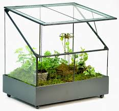 need a wardian case or terrarium shop the best