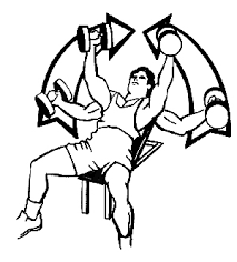 Incline Dumbell Bench Press Forensic Analysis Of A Dumbbell Fly Drummond Education