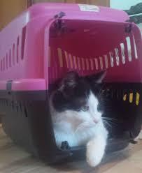 gerüche die katzen nicht mö hauskatze wikiwand