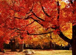 why do leaves change color in the fall tree tips mn
