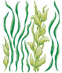 sj home interiors sj home interiors and wall decor sea grass