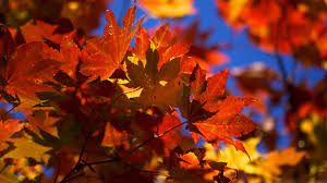 fall backgrounds free download wallpaper wiki