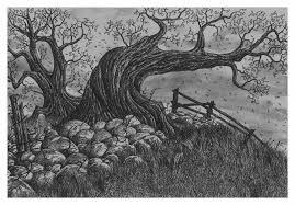 tim burton s tree jonathan baldock drawings illustration