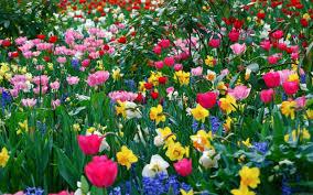 beautiful flower garden wallpapers 4k wallpapers