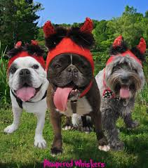 little devil halloween costume amazon com little devil costume hat for cats and dogs lg xlg