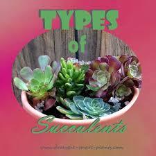 best 25 types of succulents plants ideas on pinterest succulent