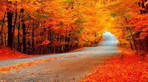 Why Fall Is The Best Season 6 Reasons Why Fall Is The Best Season Fall Peeinn Com