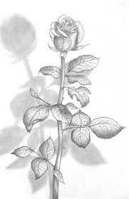 690 best drawings images on pinterest drawings draw and pencil