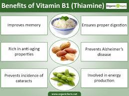 11 impressive vitamin b1 thiamine benefits organic facts