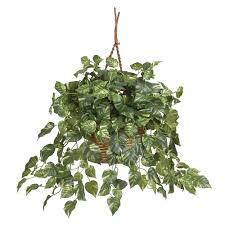 13 best indoor hanging plants livinghours