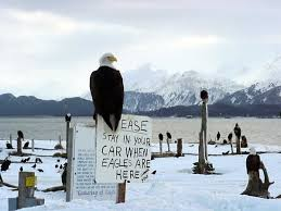 Alaska travel chanel images 57 best alaska etc images alaska wildlife and bays jpg