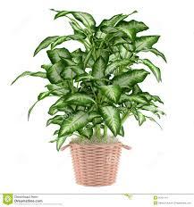 plants decorative plant inspirations decorative plant pots