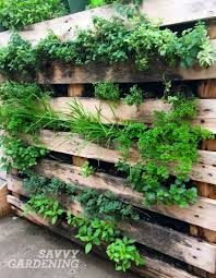 vertical vegetable gardening gardening ideas