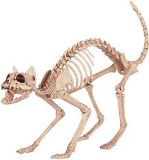 skeleton cat decorations u0026 props