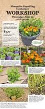 best 25 anti mosquito plants ideas on pinterest anti mosquito