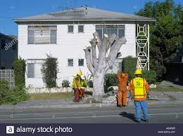 los angeles services performing tree removal due to