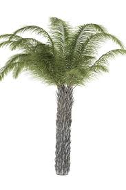Garden Tree Types - pictures of different types of palm trees