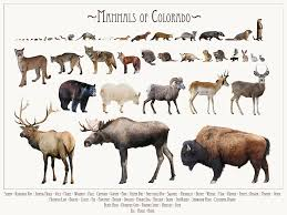 Colorado wild animals images Colorado vintage animal posters jpg