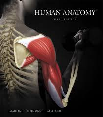 Hole Anatomy And Physiology 13th Edition Anatomy And Physiology 13th Edition Website