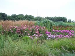 native plants landscaping f a hobson landscaping inc a design build company maryland