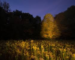 Light Painting Landscape Photography by Fall Light Painting U2013 Sherrill Photography