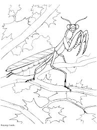 kleuterdigitaal bidsprinkhaan kleurplaat 01 insekten