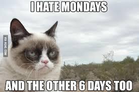Monday Cat Meme - cat memes gallery 2017 blog0r
