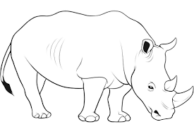 sketches of wild animals wild animals drawing easy drawing of