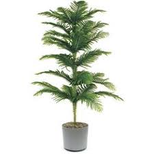18 best large indoor plants for home large indoor plants kentia