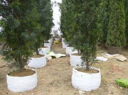 discount tree grow bags 2017 tree grow bags on sale at dhgate