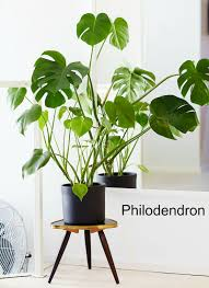Plants For The Bedroom by Bathroom Plants For The Bathroom Plants Bathroom Light Aromatic
