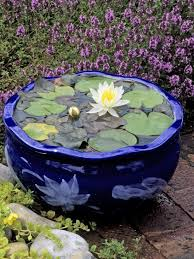 Lily Plant How To Plant Water Lilies Planting Water Lilies Hgtv