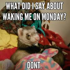 Funny Memes About Monday - 60 monday memes funny monday work memes