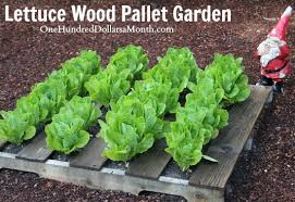 wood pallet garden ideas with pictures one hundred dollars a month