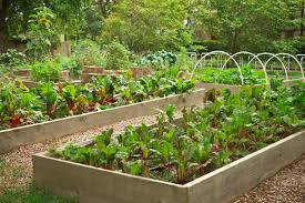 41 backyard raised bed garden ideas