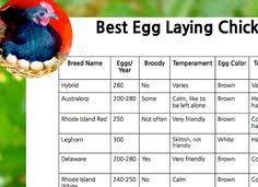 best egg laying chickens chart laying chickens egg and bird
