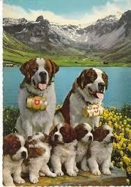 with large st bernard photo postcard