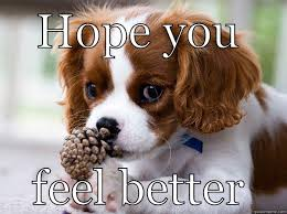 Feel Better Meme - feel better puppy quickmeme