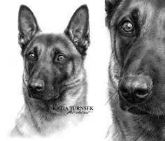 belgian sheepdog tattoo black belgian shepherd malinois cuteness pinterest