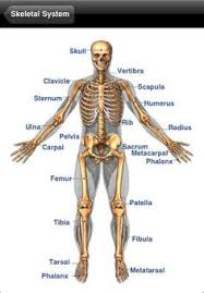Anatomy Of Human Body Organs Human Body Organs Pictures Tempat Untuk Dikunjungi Pinterest