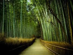 imagenes impresionantes de paisajes naturales los mejores paisajes del mundo impresionante kyoto bambú y