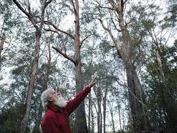 australian native food plants bruce pascoe australia u0027s aboriginal food preservationist saveur