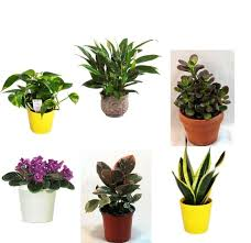 Desk Plant Desktop Farming 10 Gadgets For Growing A Cubicle Garden Cubicle