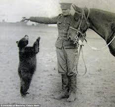 100 photographs winnipeg original winnie pooh