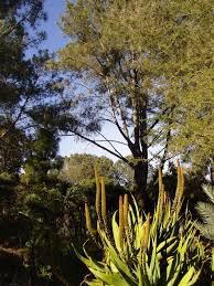 Quail Botanical Gardens Encinitas California San Diego Botanic Garden