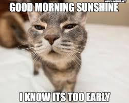 Good Morning Cat Meme - good morning sunshine meme happy wishes