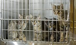 adopt a cat month american humane