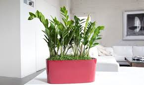 plants at home choosing the best indoor plants for your interior
