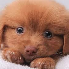 Puppy Dog Eyes Meme - 1311 best puppy love images on pinterest cute dogs cats and