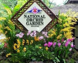 national orchid garden singapore all you need to know before